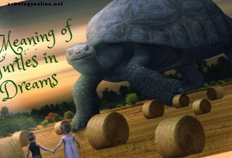 Ko nozīmē sapņi par bruņurupučiem?